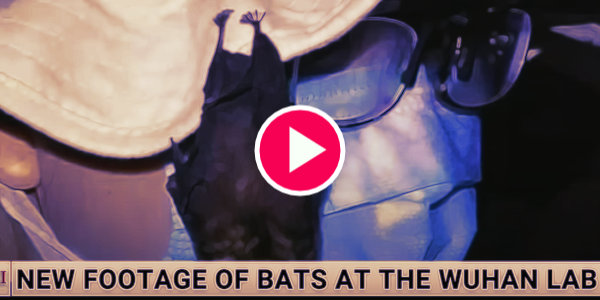 BATS in the WUHAN lab: Sky news Australia reports on the origin of covid…