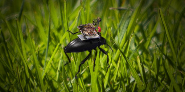 You didn't think 2020 couldn't get any weirder, did you? A team of researchers from the University of Washington (UW) has developed light-weight low-res cameras that can be mounted, and controlled, atop flying beetles…